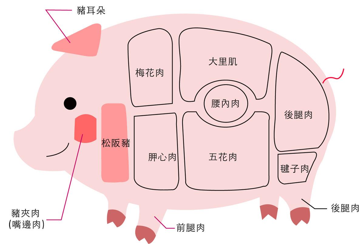 豬部位圖(加到產品頁面上面廣告)